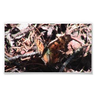 Arañas de los arácnidos de los insectos de Kooskoo Arte Fotografico