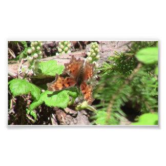 Arañas de los arácnidos de los insectos de Kooskoo Impresión Fotográfica