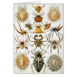 Arañas del vintage, arácnidos de Ernst Haeckel Tarjeta De Felicitación