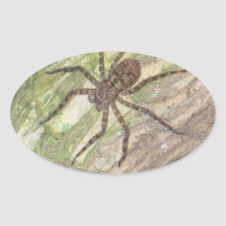 Arañas, escarabajos e insectos exóticos salvajes calcomanía ovalada