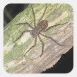 Arañas, escarabajos e insectos exóticos salvajes colcomanias cuadradas