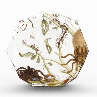 Arañas, hormigas y colibrí en una rama de…