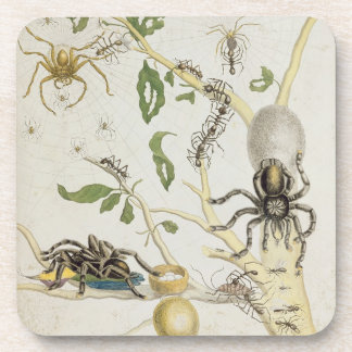 Arañas: Mygole, platea 18 de 'sobre de Voorteelin Posavasos De Bebidas