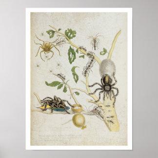 Arañas: Mygole, platea 18 de 'sobre de Voorteelin Póster