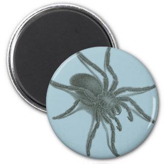Aranea Avicularia araña cubana negra Imán Para Frigorífico