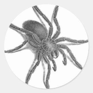 Aranea Avicularia araña cubana negra Etiquetas