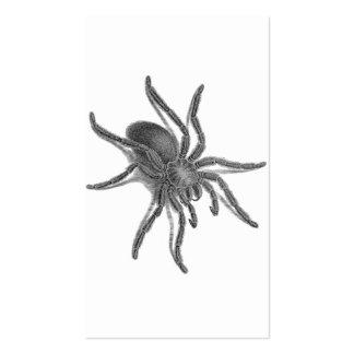 Aranea Avicularia, araña cubana negra Tarjetas De Visita
