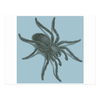 Aranea Avicularia araña cubana negra Tarjetas Postales