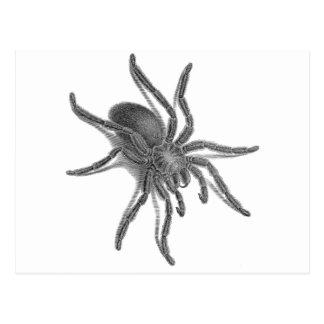 Aranea Avicularia araña cubana negra Postal