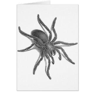 Aranea Avicularia, Black Cuban Spider Card