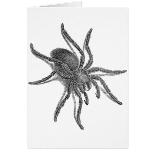 Aranea Avicularia, Black Cuban Spider Greeting Card