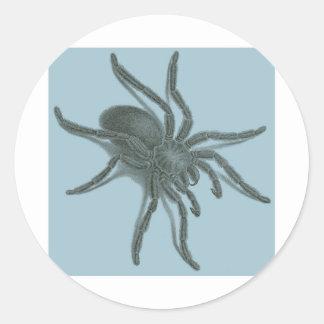 Aranea Avicularia, Black Cuban Spider Classic Round Sticker