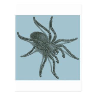 Aranea Avicularia, Black Cuban Spider Post Cards