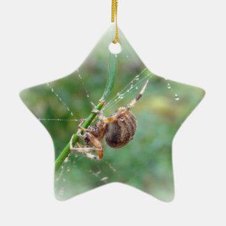 Araneus - araña del tejedor del orbe adornos