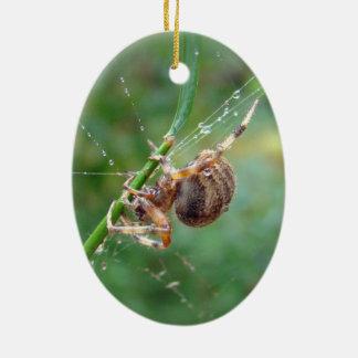 Araneus - araña del tejedor del orbe ornamentos de reyes magos