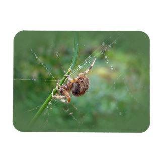 Araneus - araña del tejedor del orbe imanes flexibles