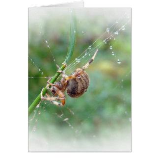 Araneus - araña del tejedor del orbe tarjeta de felicitación
