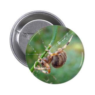 Araneus - Orb Weaver Spider Button