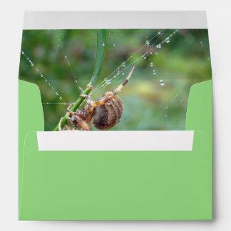 Araneus - Orb Weaver Spider Envelope