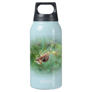 Araneus - Orb Weaver Spider Insulated Water Bottle
