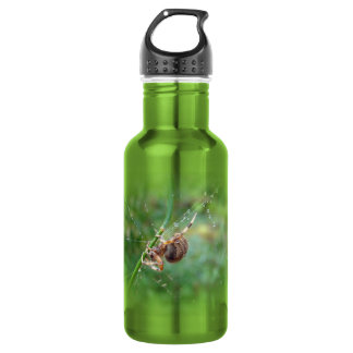 Araneus - Orb Weaver Spider Water Bottle