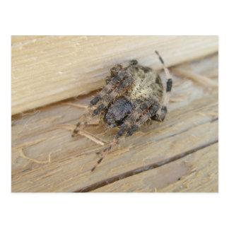 Araneus Orb Web Spider Postcard