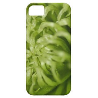 Aranha de DA del verde de Mãe Funda Para iPhone SE/5/5s