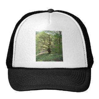 Árbol 1 de Exmoor Gorro