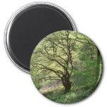 Árbol 1 de Exmoor Imán Para Frigorifico