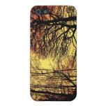 Árbol 1 de la puesta del sol de la tarde iPhone 5 carcasas