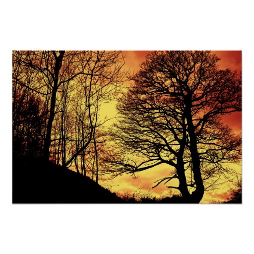 Árbol 1 de la puesta del sol de la tarde posters