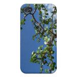 Árbol 2 del afra del portulacaria de los bonsais iPhone 4 carcasa