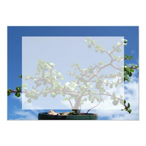 Árbol 2 del afra del portulacaria de los bonsais anuncio personalizado