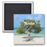 Árbol a solas de Divi Divi en Aruba Imán Cuadrado