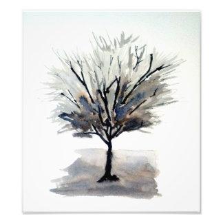 Árbol a solas en monocromo fotografías
