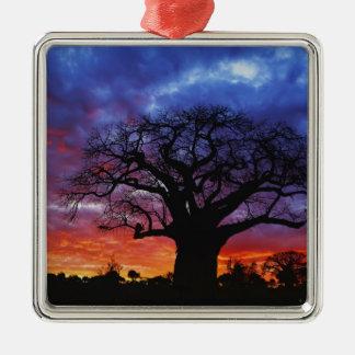 Árbol africano del baobab, digitata del Adansonia, Adornos De Navidad