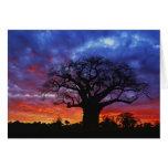 Árbol africano del baobab, digitata del Adansonia, Tarjeta De Felicitación