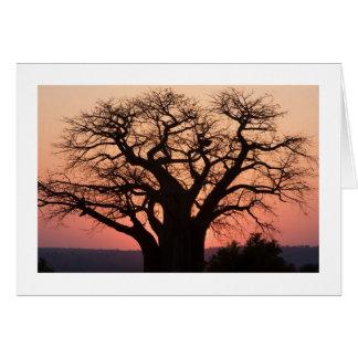 Árbol africano del baobab tarjeton
