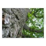 Árbol alto felicitación