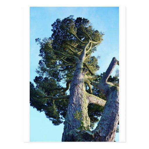 Árbol alto postales