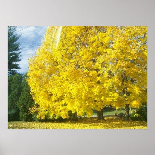 Árbol amarillo impresiones