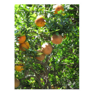 Árbol anaranjado de la Florida Postales