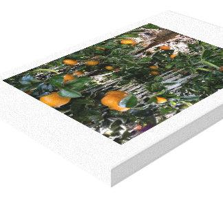 árbol anaranjado de la fruta cítrica del invierno impresiones en lona estiradas