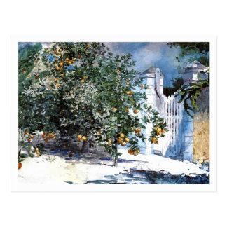 Árbol anaranjado Nassau de Winslow Homer Tarjetas Postales