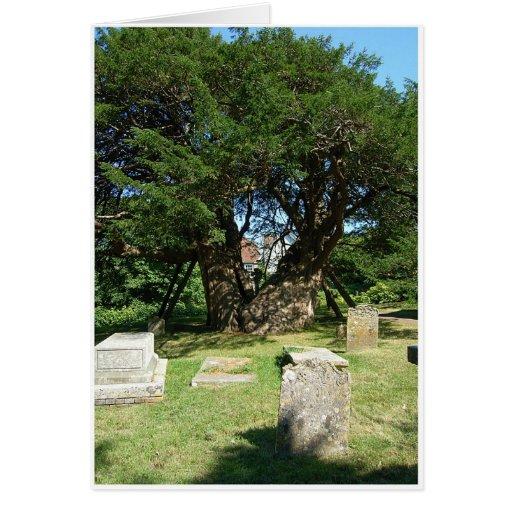 Árbol antiguo del tejo felicitacion