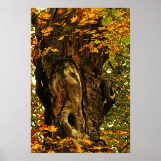 Árbol antiguo impresiones
