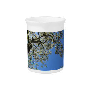 Árbol blanco floreciente de la magnolia contra el jarron