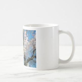 Árbol blanco, floreciente taza básica blanca