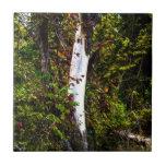 Árbol blanco llano azulejos