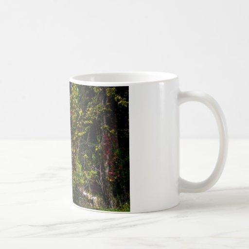 Árbol blanco llano tazas de café